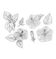 set of chinese hibiscus hand draw sketch vector image vector image