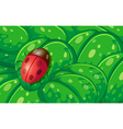 A ladybug and the green leaves vector image