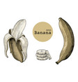 banana collection sets hand drawing vintage vector image vector image