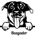 beagador peeking dog - head isolated on white vector image vector image