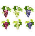 bunch of grapes different varieties vector image vector image