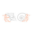 crab hermit vector image