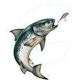 jumping fish taking bait vector image