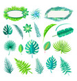 leaf tropical style set vector image vector image