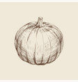pumpkin hand drawing vector image vector image