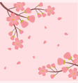 sakura branch sakura flying pink background vector image