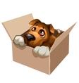 Sad stray dog cute in a cardboard box vector image