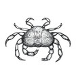 crab hand drawn isolated icon vector image vector image