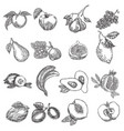 hand drawn fruits fruit set in vector image