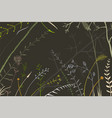 hand drawn random herbs and wild meadow wild grass vector image