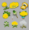 set of stages of life of a a dandelion flower vector image vector image