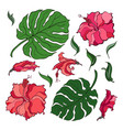 tropical set flowers and palm leaves vector image