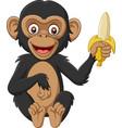 cartoon bachimpanzee holding a banana vector image vector image