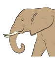 elephant head drawing isolated on white vector image