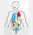 Human organs and human body vector image vector image