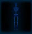 realistic human skeleton x-ray anatomy medical vector image