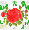 seamless texture white and pink roses with buds vector image