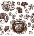 vintage cabbage background vector image
