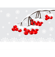 Winter background with red berries and snow vector image vector image