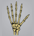 Hand bone anatomy vector image