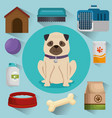 pet shop products set icons vector image vector image