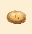 potato engraving style vector image vector image