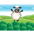 Sheep Farm vector image vector image