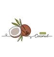 coconut simple line single vector image