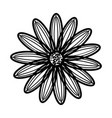 daisy flower floral hand drawn design sign vector image