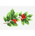christmas holly tree branch realistic vector image vector image