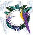 exotic and tropical birds frame vector image vector image