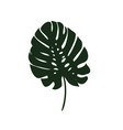 monstera leaves of a tropical plant sketch black vector image vector image