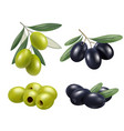 olive realistic greek nature food olive branches vector image vector image