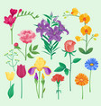 nature flowers wreath greeting vector image