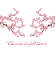 branches with pink flowers sakura is located on vector image vector image