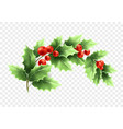 christmas crescent holly branch vector image vector image
