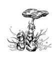 deadly amanita mushroom vector image