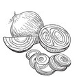 onion hand drawn full rings and half vector image vector image