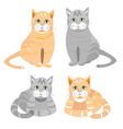 The red and gray cat sits and lies vector image vector image