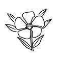 nerium oleander flower floral hand drawn design vector image vector image