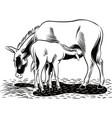 donkey suckling her puppy vector image vector image
