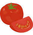 fresh red tomato isolated on white vector image vector image