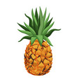 pineapple fruit tropical food image vector image vector image