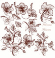 set of hand drawn hibiscus flowers vector image vector image