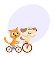 cute little dog and cat kitten characters riding vector image vector image