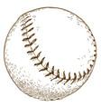engraving baseball ball vector image