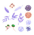 set of floral and plant items isolated on white vector image