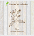 clove essential oil label aromatic plant vector image vector image