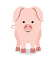 cute pig smiling vector image vector image