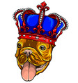 pug dog with crown on a white background vector image
